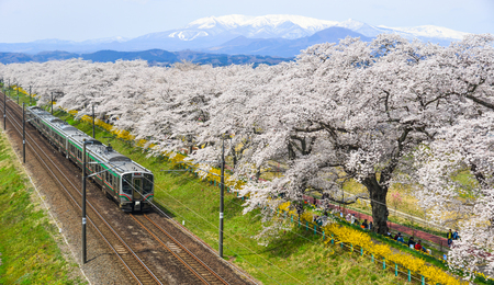 Photo pour Miyagi, Japan - April 14, 2019. Landscape scenic view of Tohoku train with full bloom of sakura (cherry blossom). - image libre de droit