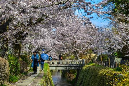 Photo pour Kyoto, Japan - Apr 9, 2019. People enjoying cherry blossom (sakura) on Philosopher Walk in Kyoto, Japan. - image libre de droit