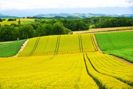 Photo pour Beautiful rural scenery at summer day in Furano Township, Hokkaido, Japan. - image libre de droit