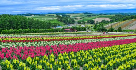 Photo for Colorful flower field in popular spot for sightseeing of Biei Town, Hokkaido, Japan. - Royalty Free Image