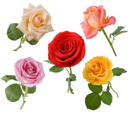 Photo for Beautiful Rose set isolated on white background - Royalty Free Image