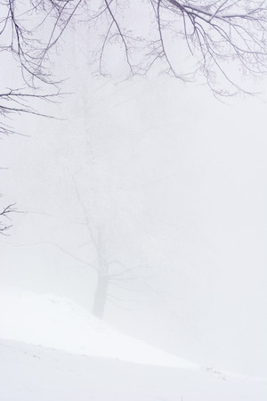 Snowy tree in fog on a hill in the snow.