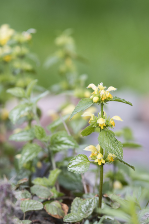Yellow muddy flowers with decorative leaves.