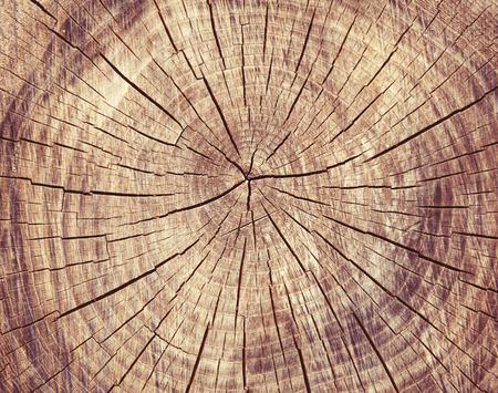 Wooden cut rexture, tree rings