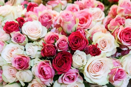 Photo pour Background of fresh natural roses in light pink red soft pastel colors, selective focus. Concept for valentines day, birthday, wedding - image libre de droit