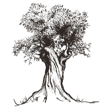 Illustration pour olive tree - image libre de droit