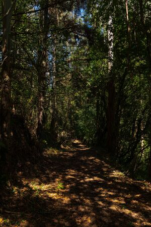 Photo for forest in the north of spain - Royalty Free Image