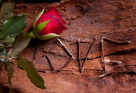 Foto de Composition as word love with red rose. For themes like love, valentine's day - Imagen libre de derechos
