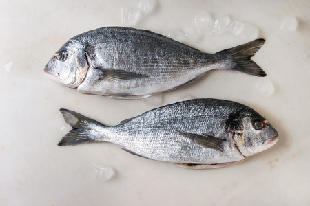 Photo pour Two raw uncooked gutted sea bream or dorado fish on ice over white marble background. Flat lay, copy space. Cooking concept - image libre de droit