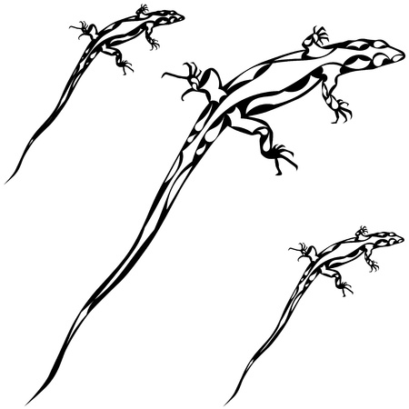 Abstract silhouette of a lizard  eps10