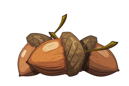 Illustration pour Group of acorns in the shell on a white background. Color drawing in cartoon style. Vector illustration of oak seeds. - image libre de droit