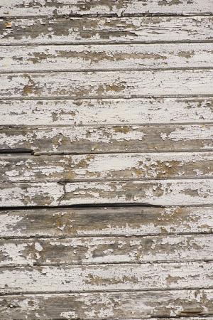 Rugged Weathered White Painted Wood Panels