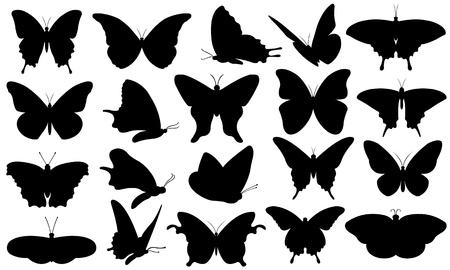 butterflie collage