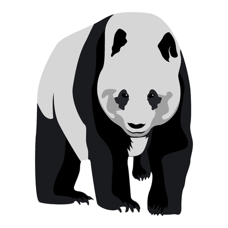 Isolated panda on a white background, Vector illustration