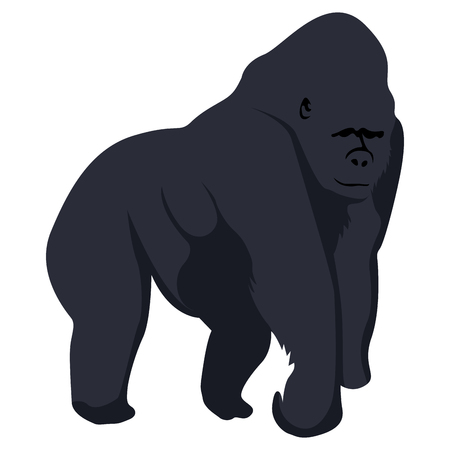 Isolated gorilla on a white background, Vector illustration