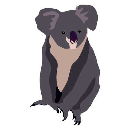Isolated koala on a white background, Vector illustration