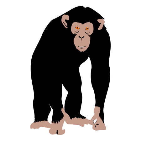 Isolated chimpanzee on a white background, Vector illustration