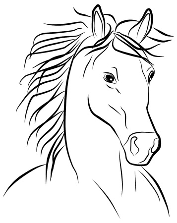 horse portrait on a white background, vector illustration