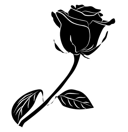 black rose silhouette - freehand on a white background, vector illustration