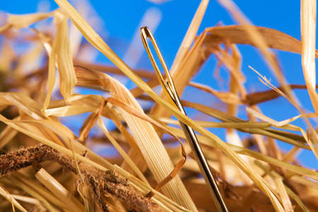 Close-up of a needle in a hayの写真素材