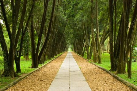 walkway in the pine woods, peaceful scene of forest.