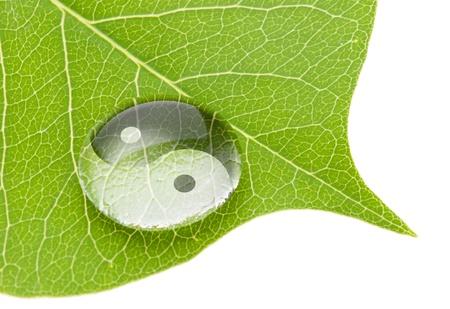 Yin yang symbol on water drop on fresh green leaf
