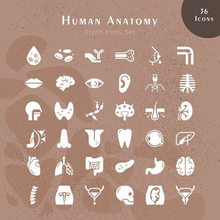 Illustration pour Set of 24 vector icons of internal human organs in a linear style isolated with background of seamless medicine pattern. - image libre de droit