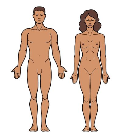 Illustration pour Illustration of the male and female body. Linear colored silhouette of a man and a woman in front. Male and female body template for fashion and medicine. Vector illustration - vector. - image libre de droit