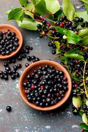 Superfood MAQUI BERRY. Superfoods antioxidant of indian mapuche, Chile. Bowl of fresh maqui berry and maqui berry tree branch on metal background, top view.