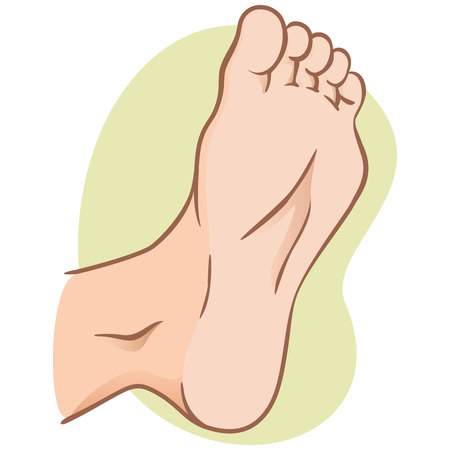 Illustration for body part illustration, plant or sole of the foot, caucasian. Ideal for catalogs, informational and institutional materials - Royalty Free Image