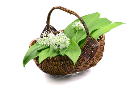 ramson wild garlic leaves and flower heads in a basket on white isolated background