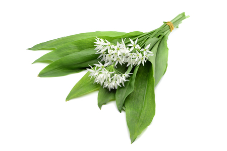 Bunch of ramson wild garlic flower heads and leaves on white isolated background.