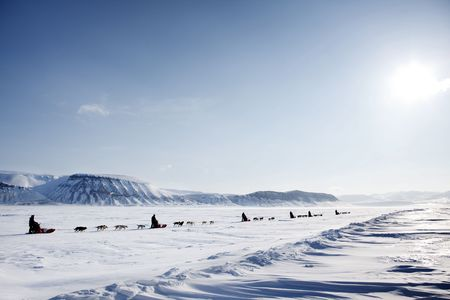 A dog sled expedition across a barren winter landscape