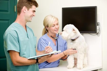 A dog at the vet having a check-up