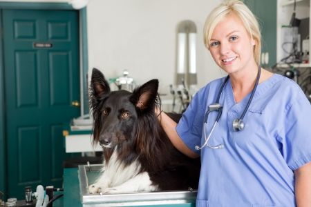 A portrait of a dog at the vet in the surgery preparation room