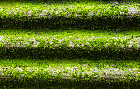green moss grows on the roof from moisture