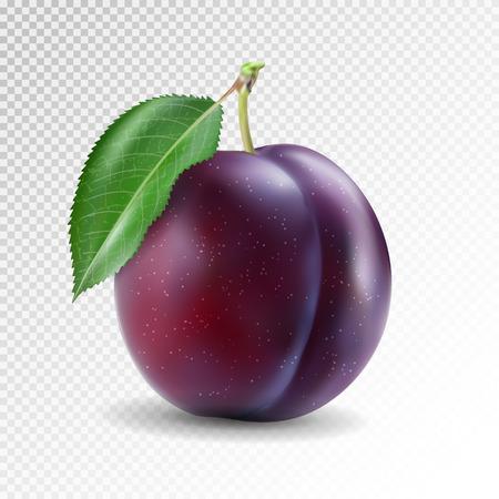Illustration pour Ripe plum with green leaves. Quality photo-realistic vector illustration of plum fruit - image libre de droit