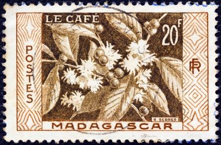 MADAGASCAR - CIRCA 1956: A stamp printed in Madagascar shows Coffee, circa 1956.