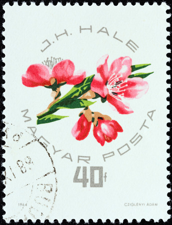 HUNGARY - CIRCA 1964  A stamp printed in Hungary from the  National Peaches and Apricots Exhibition, Budapest  issue shows J H  Hale designs of peaches or apricots, circa 1964