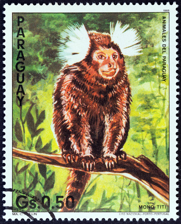 PARAGUAY - CIRCA 1985: A stamp printed in Paraguay from the \\\Nature Protection - Animals of Paraguay \\\ issue shows a Common marmoset (Callithrix jacchus), circa 1985.