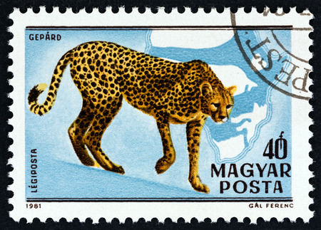 HUNGARY - CIRCA 1981: A stamp printed in Hungary from the Birth centenary of Kalman Kittenberger, explorer and zoologist issue shows Cheetah, circa 1981.