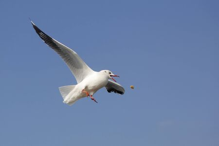 Photo for photo of flying seagull bird on beautiful sky background - Royalty Free Image