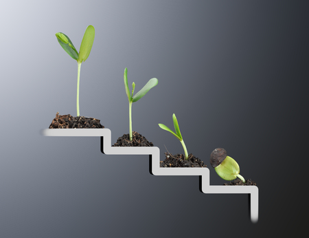 Photo pour Plant on staircase , growth , development concept - image libre de droit