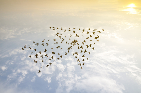 Photo pour Birds on sky , growth development concept - image libre de droit