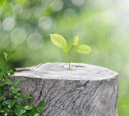 Foto de Plant growing on timber on green bokeh background - Imagen libre de derechos