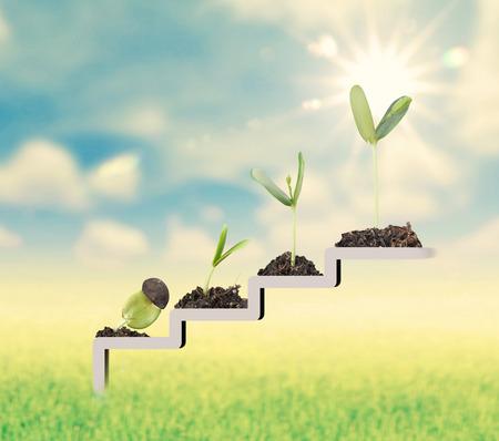 Photo pour Plant on staircase , growth , development concept - image libre de droit