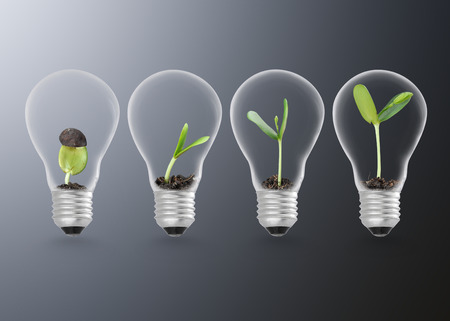 Plant growing in lightbulb , ecology ideas growth concept