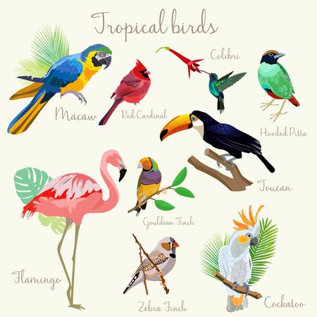 Illustration pour Bright color Exotic tropical birds set. Macaw, red cardinal, hooded pitta, colibri, toucan, flamingo, cockatoo, gouldian zebra finch. - image libre de droit