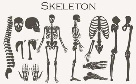 Illustration pour Human bones skeleton silhouette  collection set. High detailed Vector illustration - image libre de droit