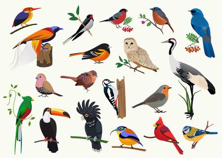 Ilustración de Various cartoon birds set for any visual design - Imagen libre de derechos